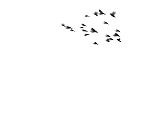 A flock of pigeons flies in a loop around the screen. The flock swoops and dives. Easy to silo or key over other footage or stills. (This is a PAL version of clip 602713)