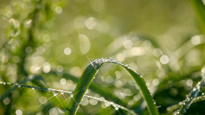 Green grass with waterdrops. Shallow DOF. Shot with motorized slider and star filter #6339392