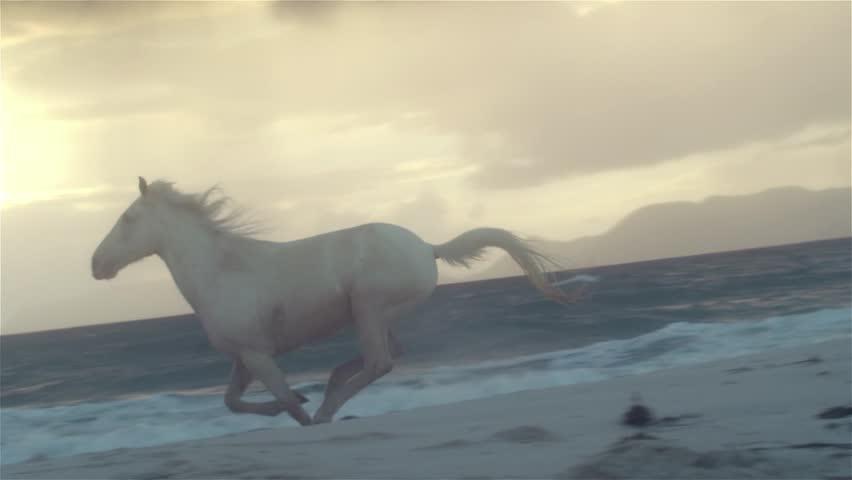 Horse running on beach    Shutterstock HD Video #6390734