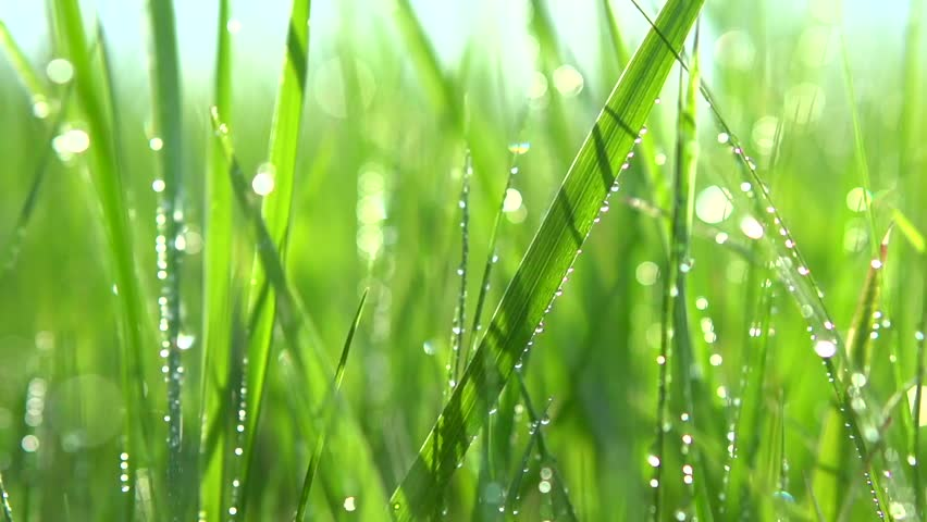 Grass with dew drops. Blurred Grass Background With Water Drops closeup. Nature. Environment concept. Slow motion 240 fps. HD video footage 1080p