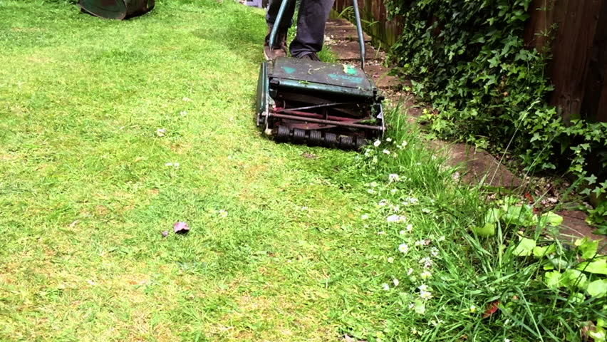 Mowing a green garden lawn covered in daisies with a manual push cylinder mower in super slow motion.