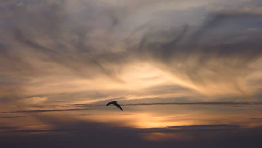 One Bird Flying Through Frame Stock Footage Video (100% Royalty-free)  6443615 | Shutterstock