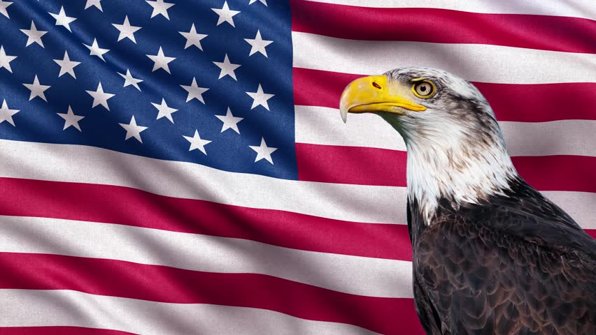 Ultra-HD flag of the USA waving in the wind with bald eagle. Seamless loop with highly detailed fabric texture. Loop ready in 4k resolution. #6697364
