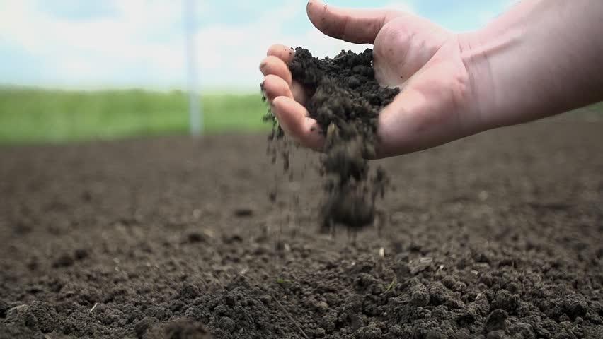 Detail shot of gardener checking the quality of the soil in his garden