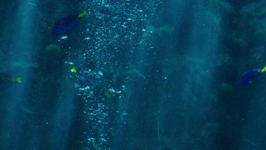 Sunlight in Tropical Ocean 03 Underwater Marine Life Shark | Shutterstock HD Video #6741880