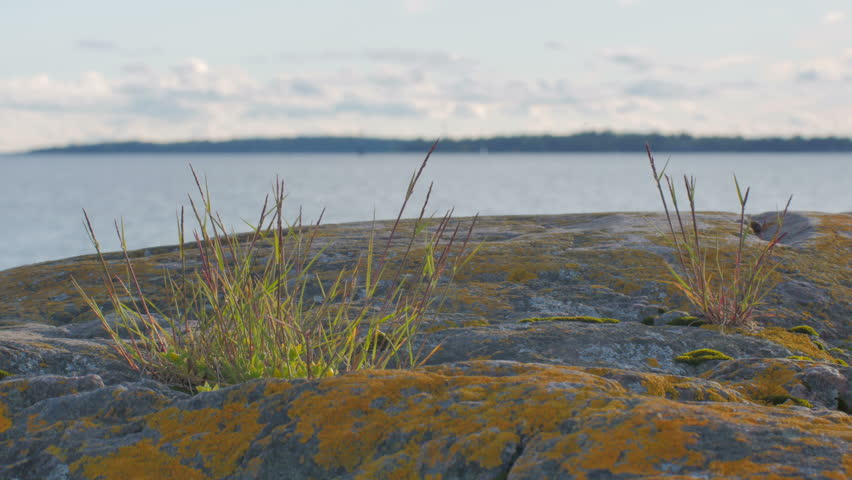 Grass growing on a coast cliff in Suomenlinna near Helsinki, Finland. Warm summer day.Yellow scale (Xanthoria parietina) growing on the rock. | Shutterstock HD Video #6765052