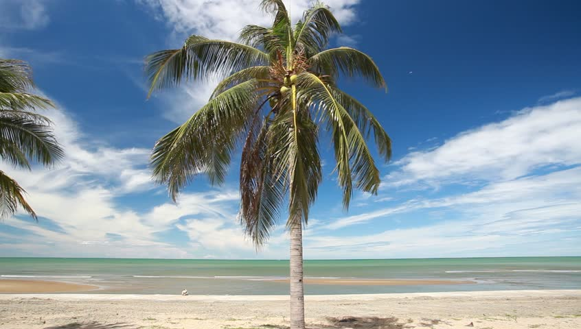 Coconut Palm tree on the white sandy beach #6776956