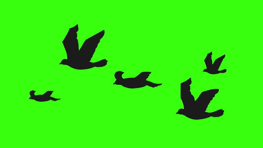Flock Of Birds Silhouette Flying Stock Footage Video 100 Royalty Free 6880174 Shutterstock