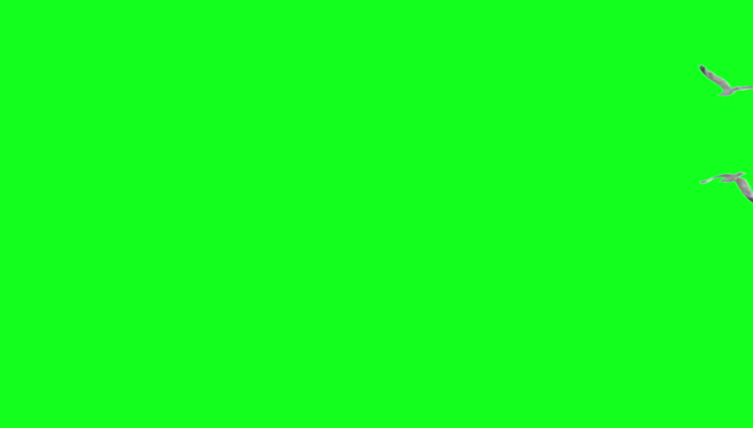 Two seagulls flying away on green screen. Ready to be keyed.
