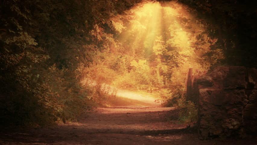Mystical Forest (Soft focus version) | Shutterstock HD Video #6912820