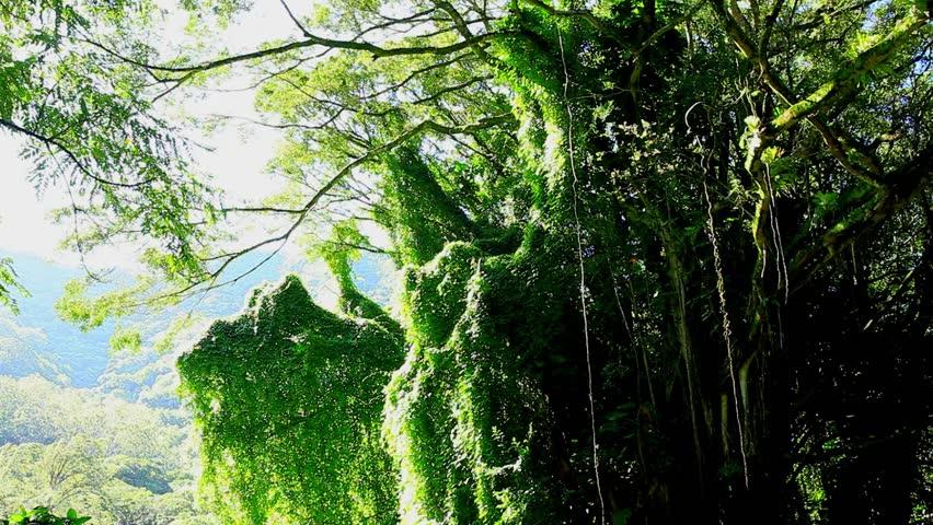 Amazonian rainforest, Brazil | Shutterstock HD Video #6951064
