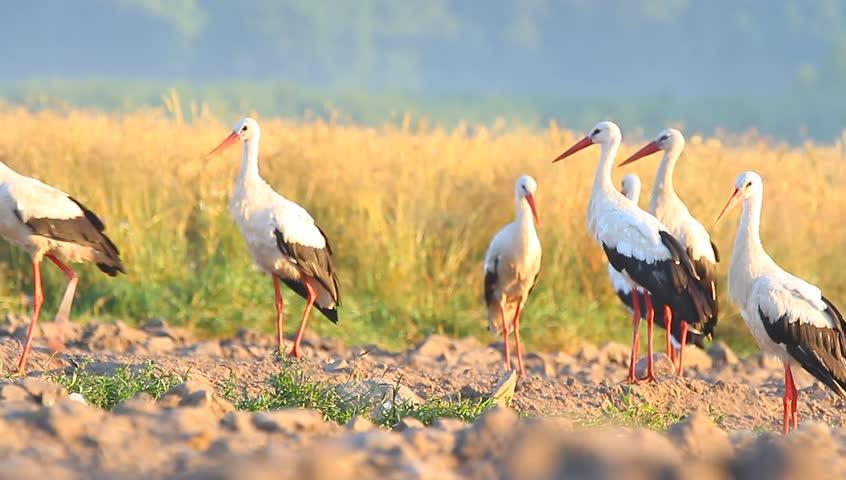 Wild bird in natural habitat, nature series | Shutterstock HD Video #6963802