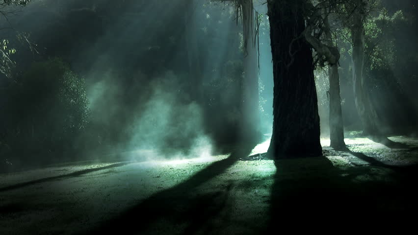 Misty forest. Steam rises from frost amongst silhouetted trees, illuminated by sun rays, green version. This shot could also be used for a dark spooky night time horror scene of moonlight in a forest. | Shutterstock HD Video #6963970