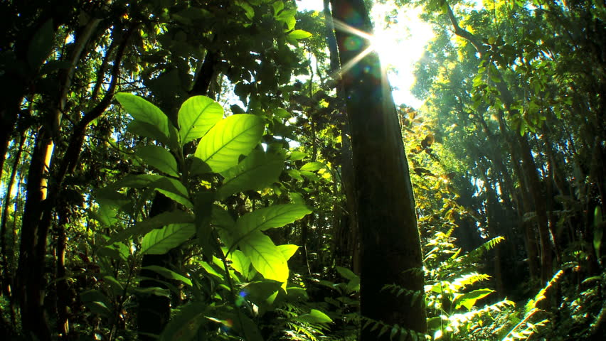 Sunlight filtering onto lush green rainforest with audio