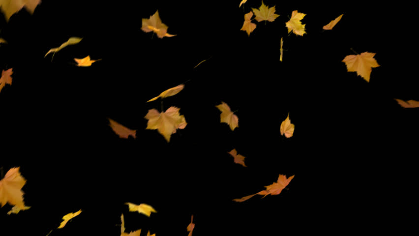 blowing leaves - looped and masked 3d animation