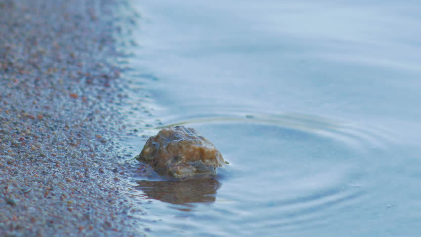 Sand grains, small rocks and waterline on a beach. Warm summer day. | Shutterstock HD Video #7031821