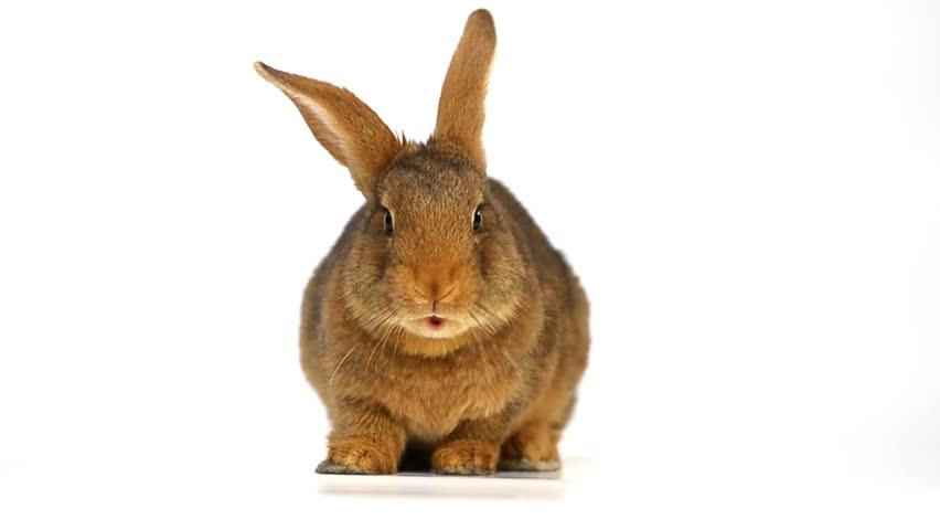rabbit | Shutterstock Video #7111390