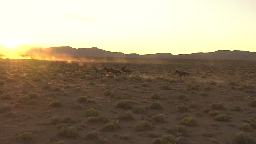 CIRCA 2010s - Very good aerial of wild horses running against sunset.
