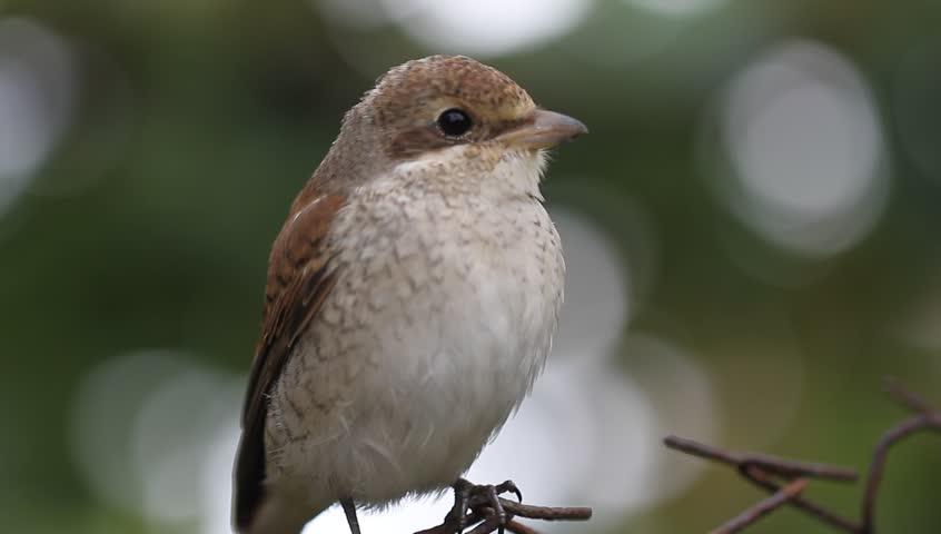 Bird on fence | Shutterstock HD Video #7144261
