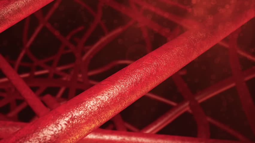 Small blood vessels shown in a small cluster together showing red blood cells in a red atmospheric background #7187395