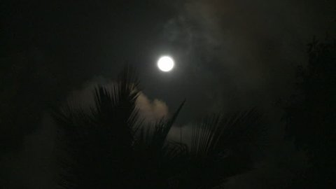 clouds pass over moon palms wave in wind