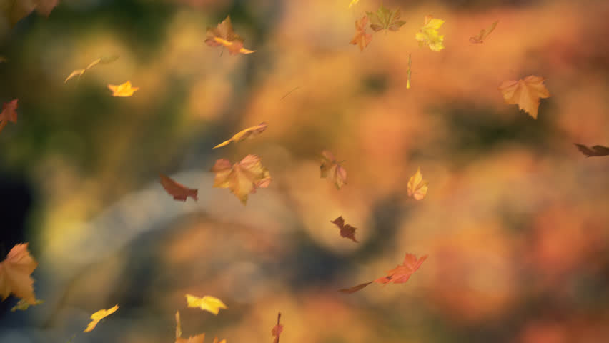 Falling Leaves Blowing In The Stock Footage Video 100 Royalty Free 725338 Shutterstock