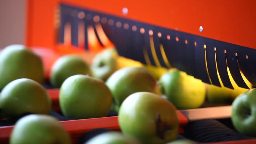 Sorting apples   Shutterstock HD Video #727045
