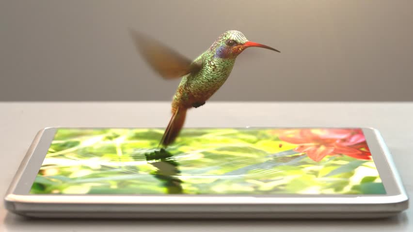 Tablet pc and humming-bird, 3d animation, 4K | Shutterstock HD Video #7301926