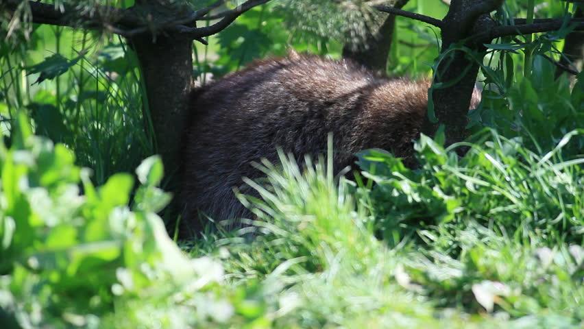 Raccoon | Shutterstock HD Video #731170