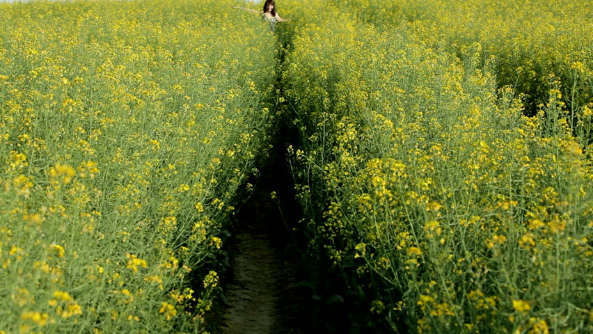 woman walking in yellow rape field at springtime
