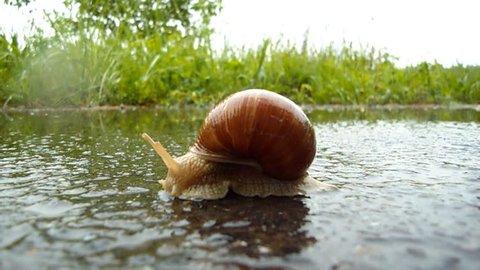 A Snail in the Rain : vidéos de stock (100 % libres de droit) 739243 |  Shutterstock