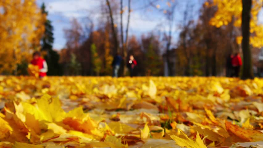 CSFOTO 5x3ft Autumn Backdrop Red Fallen Tree Background for Photography Autumn Park Bench Fallen Leaves Grassland Sunshine Natural Scenery Interior Decor Adults Kids Portraits Polyester Wallpaper