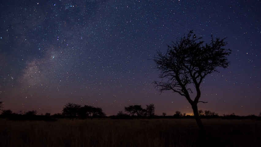 A scenic static sunset / day to night timelapse transition of an Acacia tree with the Milky Way twisting through a dark landscape scene and the moon rises to light up the landscape. 4K #7451308