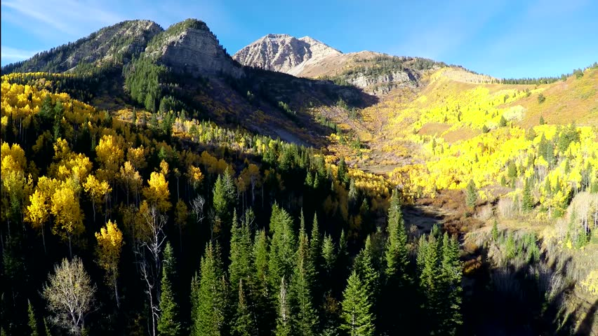 4K Mountain morning scene flying back showing beautiful fall colors of aspen trees in the high rocky mountains of Utah with a moose walking in a stream below