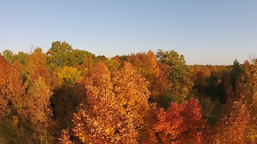 Aerial Shot Flying Over Fall Color Trees In A Hardwood Forest In North America