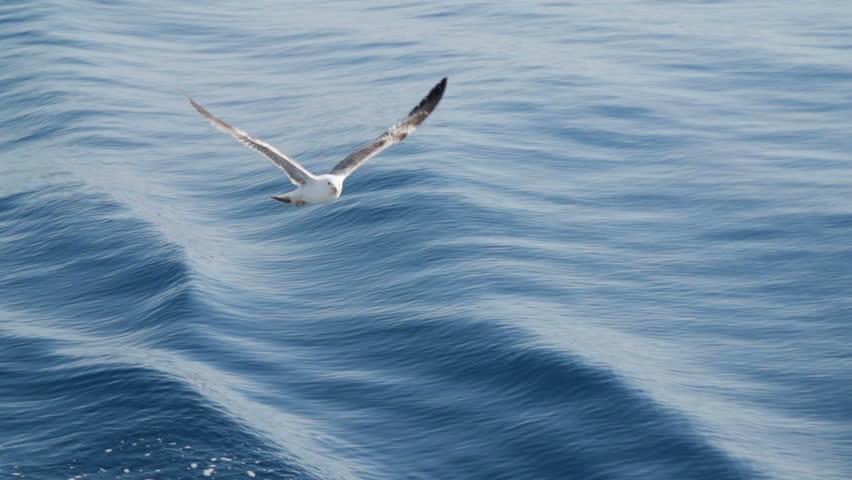 Seagulls flying in slow motion | Shutterstock HD Video #7739107