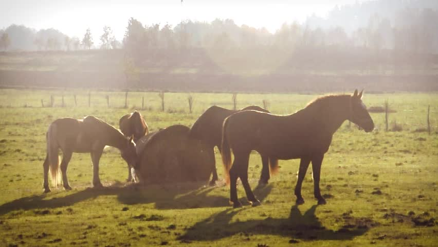 Mare and her small herd | Shutterstock HD Video #7763443