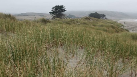 Northern California Coast Sand Dune Grass With Sound of Waves in Background