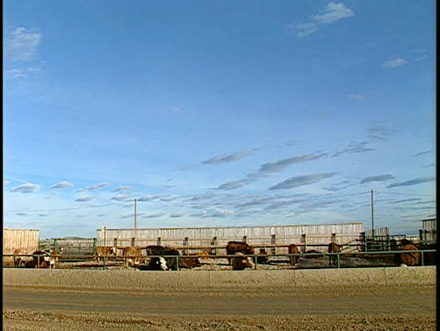 two shot cattle liner at feedlot. (BetacamSP)