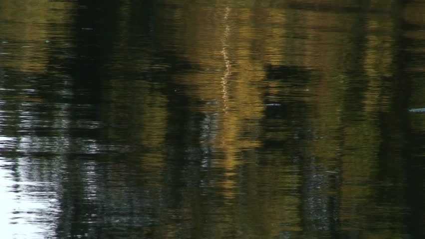 Forest reflection in an calm lake in Sweden | Shutterstock HD Video #80995