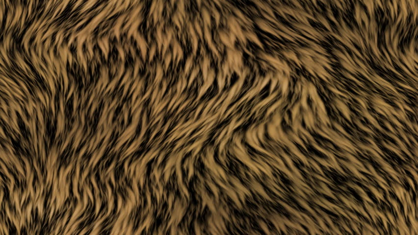 Fur generated seamless loop video | Shutterstock HD Video #8149825