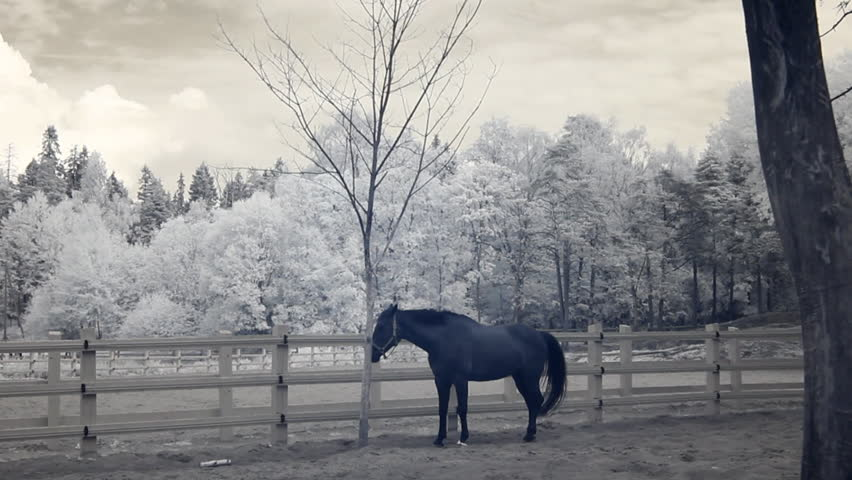 Infrared fauna: horse stays still at midday in paddock 4