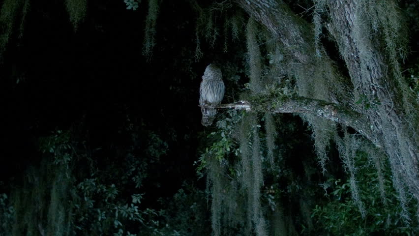 An owl sits in a tree at night