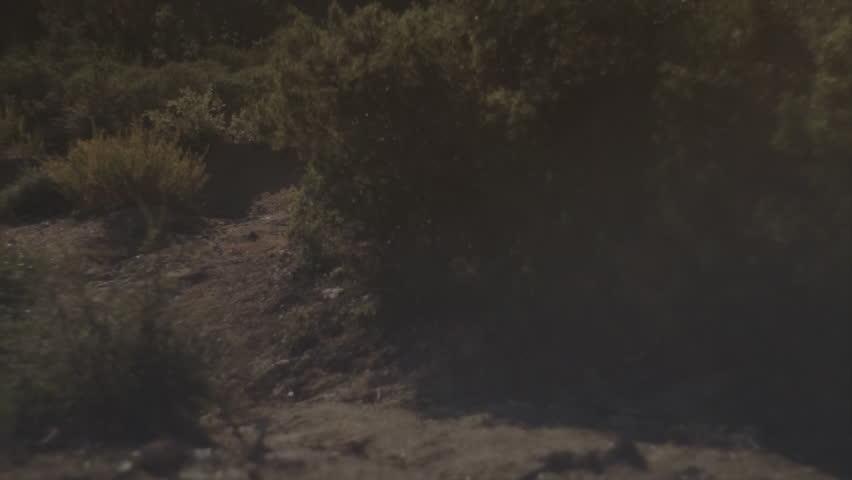 A mountain biker swiftly take turns while biking on a dirt trail | Shutterstock HD Video #8241157