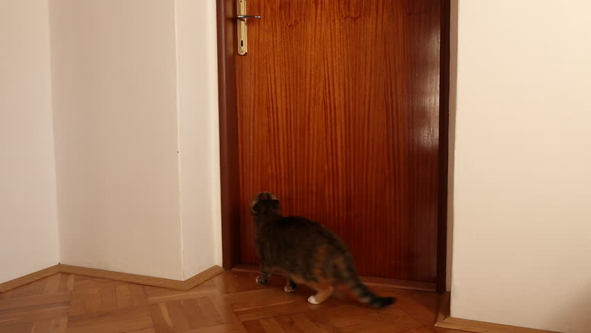 My cat can open the doors by jumping on the door handle. #8275075