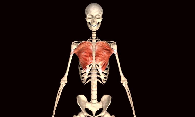 Skeleton body | Shutterstock HD Video #8326264