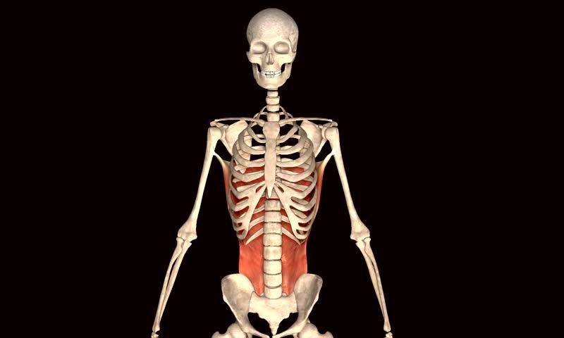 Skull muscle | Shutterstock HD Video #8326270