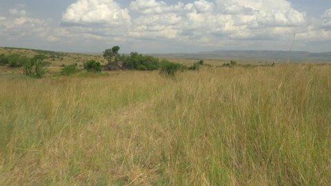 AERIAL: Safari in Kenyan Maasai Mara