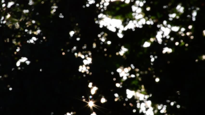 Sunshine Through Trees, Loop | Shutterstock HD Video #8503057