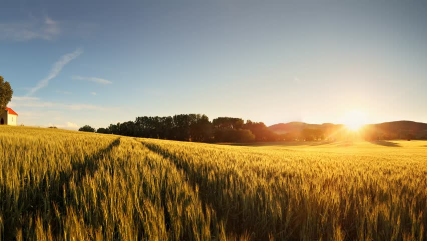 Sunset over wheat field with path and chapel in Slovakia #8651173